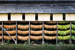 Tobacco shed Royalty Free Stock Photography