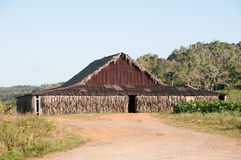 Tobacco shed by tobacco field in Cuban countryside Stock Photo