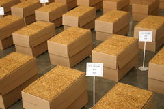 Tobacco stock. Tobacco flakes ready to export Stock Photo