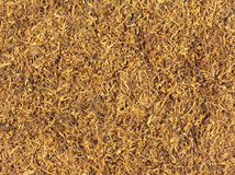 Tobacco Texture Stock Photo
