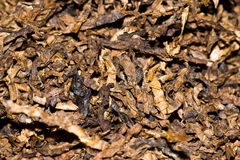 Tobacco texture Royalty Free Stock Image