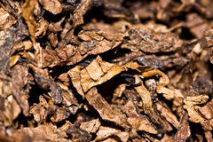 Tobacco texture Royalty Free Stock Photography