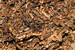 Tobacco texture Stock Photography