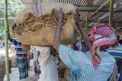A Tobacco worker carrying lot of tobaccos in outside of Dhaka, Vatara, manikganj, Bangladesh. royalty free stock photos