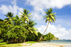 Tobago. Batteaux Bay in Tobago, Caribbean Royalty Free Stock Photo