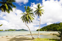 Tobago. Batteaux Bay in Tobago, Caribbean Royalty Free Stock Photography
