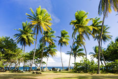 Tobago. Granby Point in Tobago, Caribbean Royalty Free Stock Photography