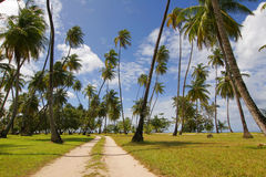 Tobago palms. Beach carribien west indies green sea road on beach Stock Image