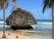 Tobago in the West Indies Stock Photos