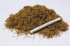 tobak Arkivbild
