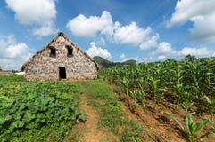 Tobakladugård i den Vinales dalen, Kuba Arkivfoto