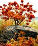 Tobermory Royaltyfri Bild