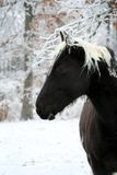 Tobiano pinto horse in winter Royalty Free Stock Photography