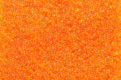 Tobiko, flying fish roe Stock Photography