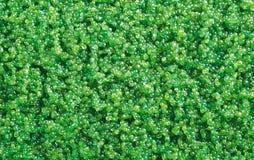 Tobiko green Arkivfoton