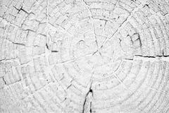 Tocón con el fondo de los anillos anuales blanco y negro fotos de archivo