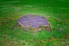 Tocón de árbol Fotos de archivo