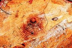 Tocón de árbol Fotos de archivo libres de regalías
