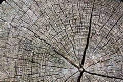 Tocón de árbol Foto de archivo