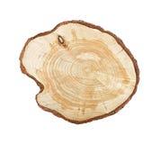 Tocón de árbol aislado Fotos de archivo