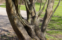 Tocón de árbol angular Foto de archivo