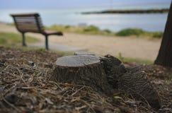 Tocón de árbol con el banco vacío borroso imagen de archivo libre de regalías