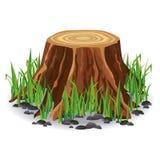 Tocón de árbol con la hierba verde Imagen de archivo libre de regalías