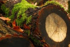 Tocón de árbol con la publicación anual Imagen de archivo