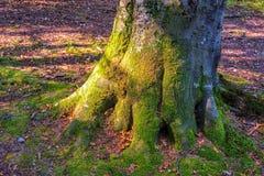 Tocón de árbol cubierto con el musgo Fotografía de archivo libre de regalías