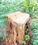 Tocón de árbol dañado Fotografía de archivo libre de regalías