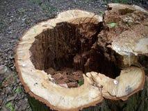 Tocón de árbol de la descomposición imagenes de archivo