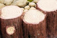 Tocón de árbol de un árbol del corte imagen de archivo libre de regalías