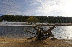Tocón de árbol delante del agua Fotos de archivo libres de regalías
