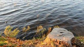 Tocón de árbol en costa y el agua del lago almacen de metraje de vídeo