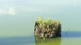 Tocón de árbol en el agua almacen de metraje de vídeo
