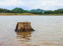 Tocón de árbol en el lago Fotos de archivo