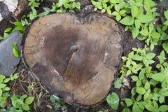 Tocón de árbol en el parque Imagen de archivo