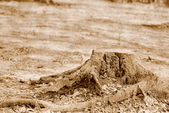Tocón de árbol en el parque Imagenes de archivo