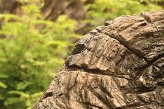 Tocón de árbol en el salvaje Fotografía de archivo