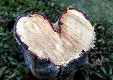 Tocón de árbol en forma de corazón Foto de archivo libre de regalías