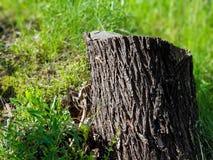Tocón de árbol en hierba en el parque de la ciudad imagenes de archivo