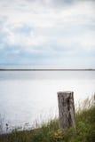 Tocón de árbol en hierba larga en paisaje tranquilo de la naturaleza. Fotos de archivo libres de regalías