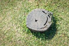 Tocón de árbol en la hierba verde Imagenes de archivo