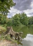 Tocón de árbol en la orilla del pequeño lago Fotos de archivo
