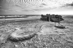 Tocón de árbol en la playa Imágenes de archivo libres de regalías