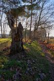Tocón de árbol en la puesta del sol fotografía de archivo libre de regalías
