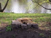 Tocón de árbol enturies-viejo del ¡de Ð en la orilla del río imagen de archivo libre de regalías
