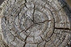 Tocón de árbol gris viejo en Alemania Imágenes de archivo libres de regalías