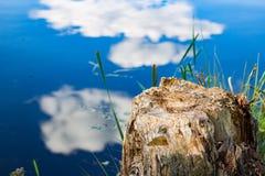 Tocón de árbol hermoso cerca del lago foto de archivo libre de regalías