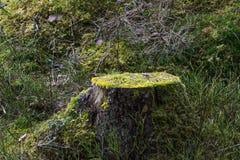 Tocón de árbol musgo-crecido viejo Imagenes de archivo